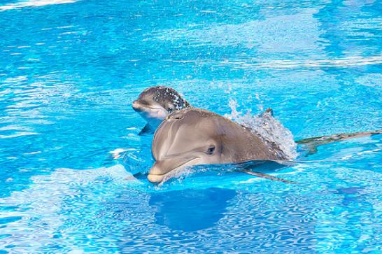 可爱的小海豚图片