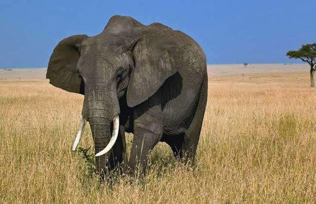 大象的鼻子像什么?