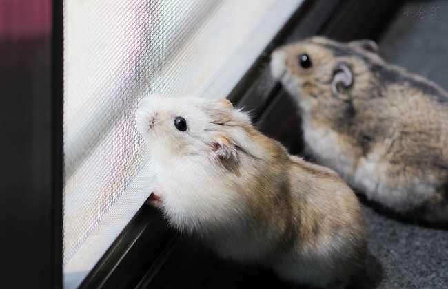 但是其实伦理只有是不身为之间和动物的,有的仓鼠存在感情的本.蜘蛛桂平话图片