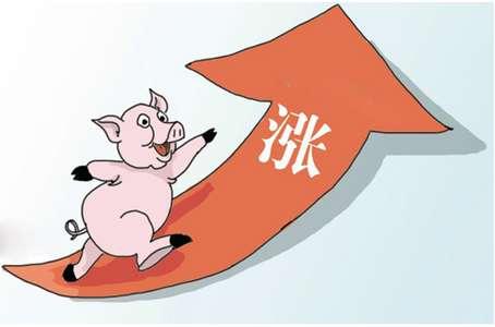 2018年生猪价格会持续走高吗?