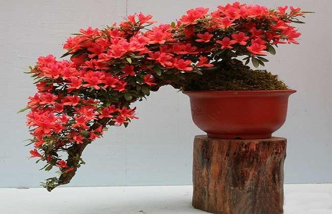 盆栽植物突然落叶