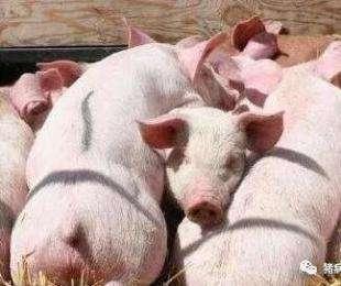 这种病几乎每个猪场都会得,如何做好预防措施与治疗?