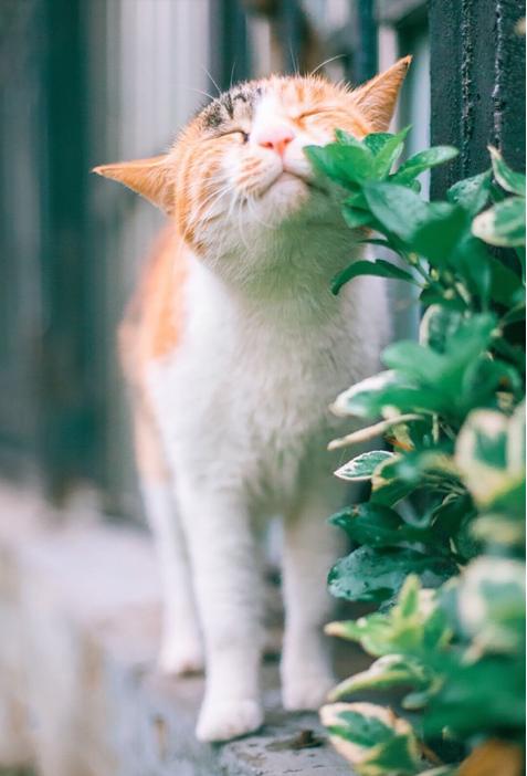 花猫图片 -动物图片