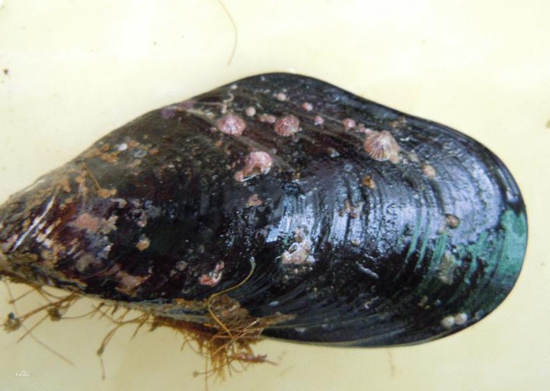 贝类海鲜图片及名称 -动物图片