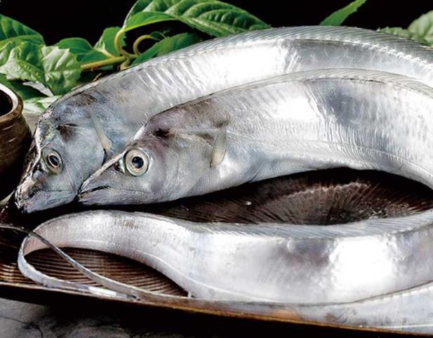 宠物频道 动物图片  白带鱼分布在温热海域中,在世界各地的海里都会有