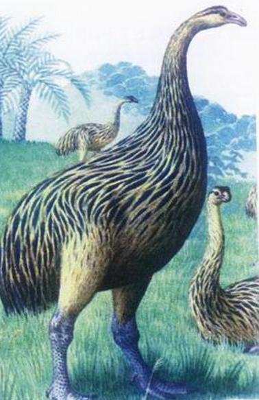 宠物频道 动物图片   恐鸟是遭到毛利部落的疯狂捕杀已经灭绝了一种不