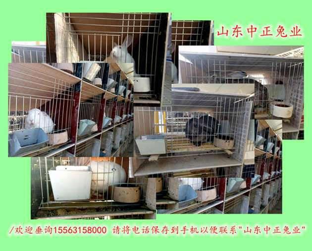 巴音郭楞獭兔育种基地