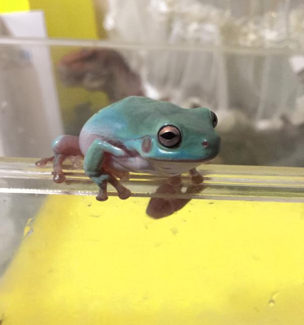 树蛙图片 -动物图片