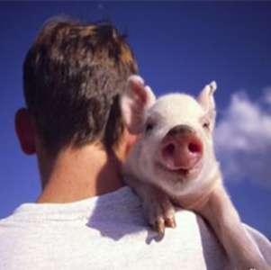 据说,今年养殖补贴将偏向这几类养殖户?