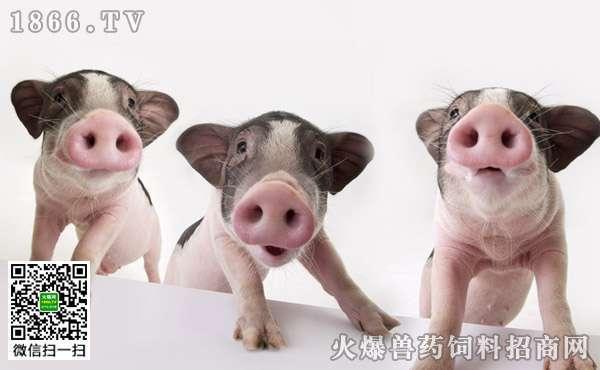 僵猪产生的原因,僵猪脱僵的方法