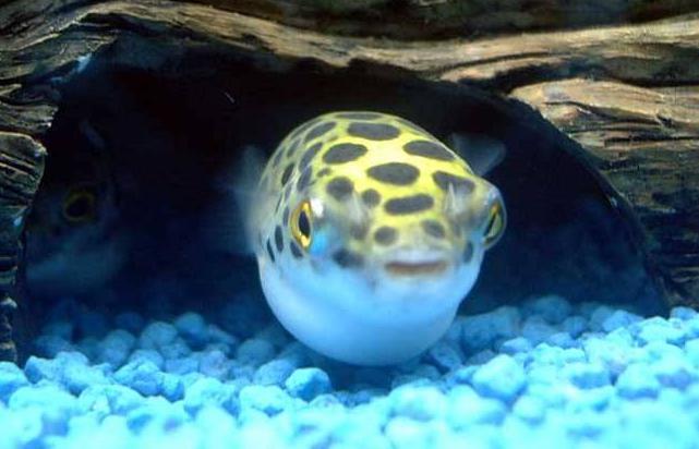 壁纸 动物 海底 海底世界 海洋馆 水族馆 鱼 鱼类 641_412