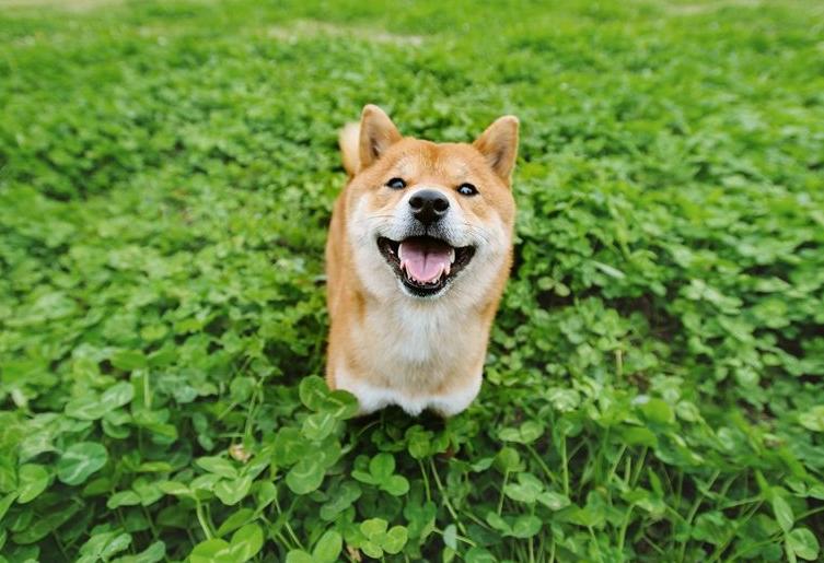 宠物写真图片 -动物图片