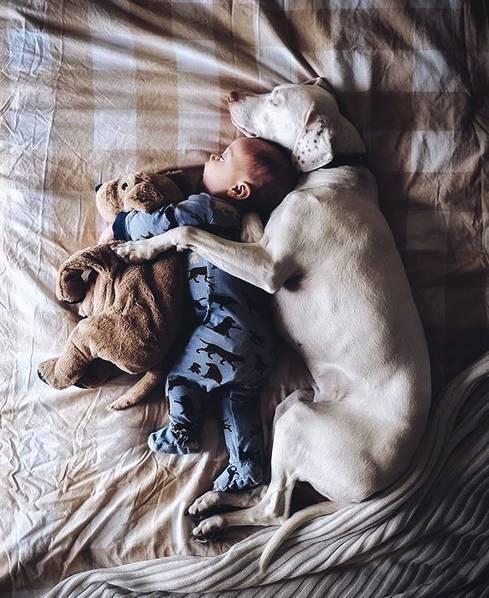 这是我见过的最可爱照片:养个狗狗陪伴孩子成长,日子真暖