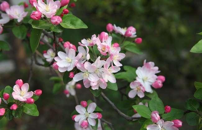 病虫害的影响也是会导致叶子出现问题的,这大多是由于平时不注意盆土
