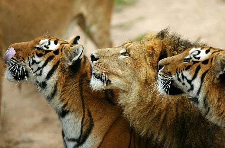 接下来带来大自然中动物摄影图片大全,一起来欣赏吧!