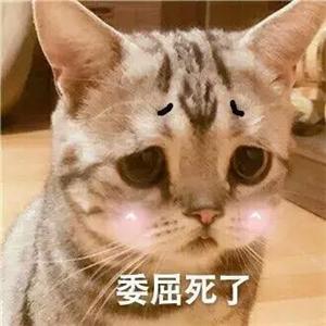 猫咪卖萌表情包