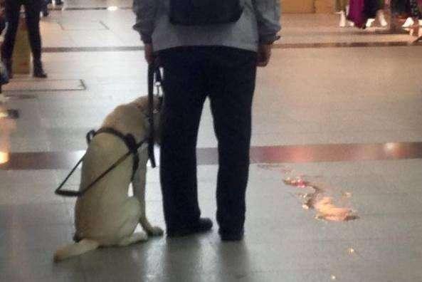 导盲犬不小心尿在过道上一脸自责,店家没责备反而安慰直说没关系