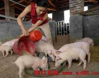 农村小型养猪场设计图 科学养猪简易猪栏猪舍建造图