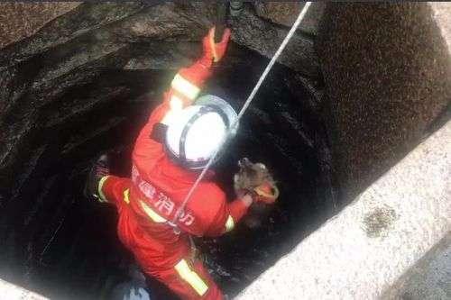 晋江一小狗打架时不小心掉入井中,居民报警求助