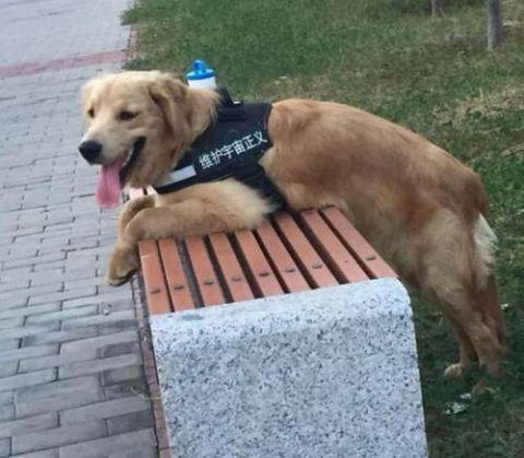 养了这些有洁癖的狗狗,主人心里一定很憋屈