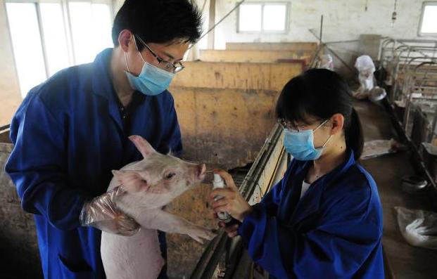春季产房母乳猪腹泻发生几率大,这几个方法可避免! (1)