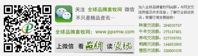 丁磊:办养猪场比办互联网公司难多了,养猪人真的不容易
