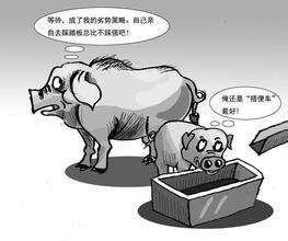 猪流感的鉴别诊断与防治 老场长都是这么控制的!