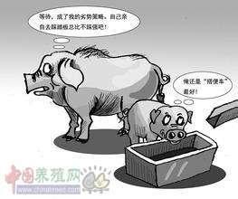 原来老场长都是这么控制猪流感的!