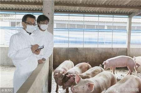 冬春季病毒性腹泻的综合防治,实战兽医总结 (1)