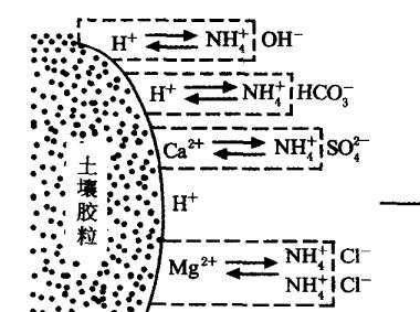 氢元素离子结构示意图