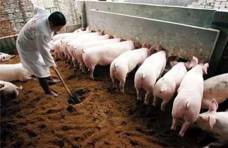 母猪产后不让孩子吃奶怎么办?