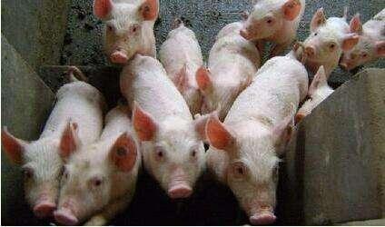 春季后集中出栏是导致短期下降的原因,猪肉价格上不去 养的越多亏的就越大! (1)