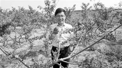 """杨良杰:当好专家""""二传手"""" 培养果农明白人"""
