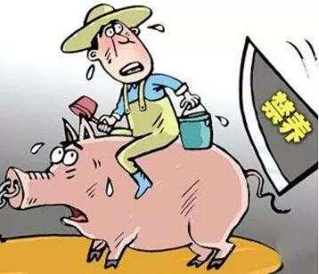 养殖场拆迁又出新花招,养猪人要当心了!