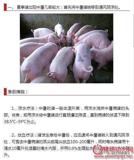 夏季猪中暑的急救方案推荐 (1)