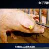 想要获知一头猪的前世今生?1秒足矣!