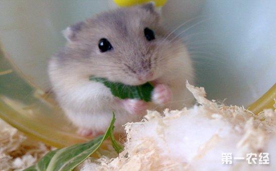 仓鼠的零食反思幼儿园恐龙教案介绍图片