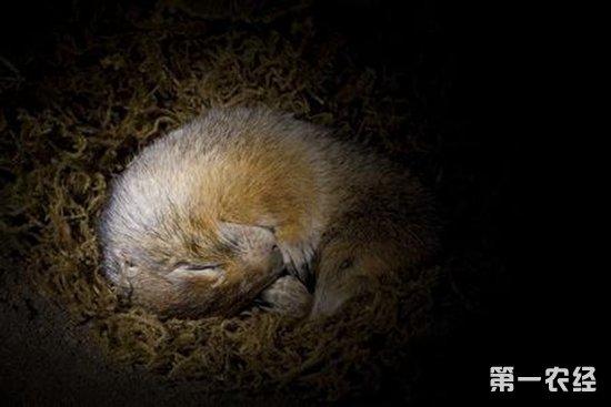 世界上十五种需要冬眠的动物,快来看看你认识几个!