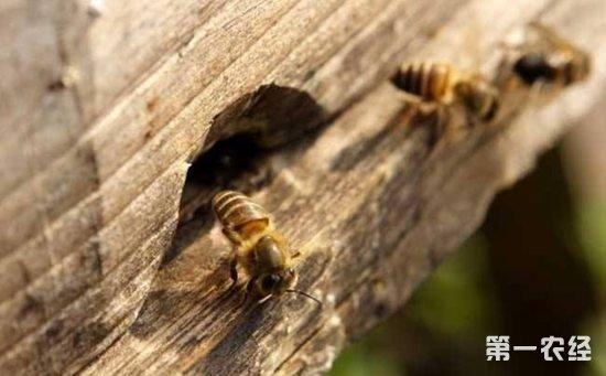 要点养殖的管理综合蜜蜂蝙蝠侠用枪图片