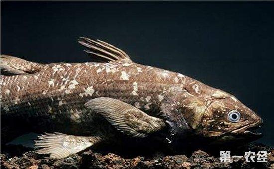 软骨鱼和硬骨鱼有什么区别?
