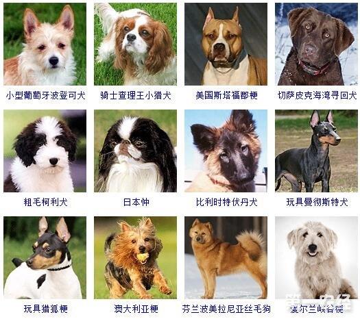 动物种类大全及名称