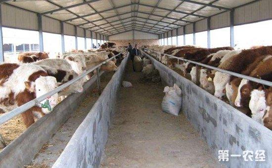 养牛场建设费用:建牛舍一平方米需要多少钱?