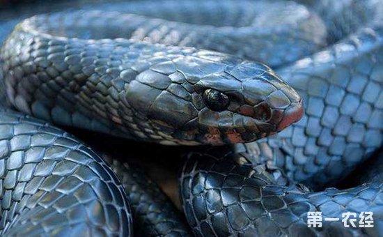 蓝蛇的种类图片大全