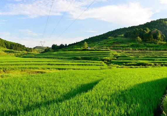 农业农村部关于印发《农业绿色发展技术导则(2018—2030年)》的通知