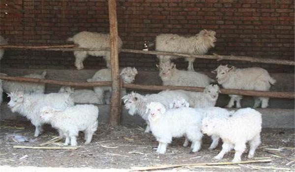 断奶羔羊育肥方法