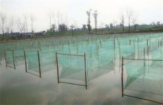 5、網箱養殖模式 網箱養殖模式養殖模式要選擇在向陽避風的湖泊、水庫,最后在水質良好、無污染的地區,網箱的面積可大可少,根據養殖環境制作。飼養時在網箱內鋪一層肥泥,另外網箱的高度要高于水面30-40公分,防止泥鰍跳逃,喂食以人工餌料為主,所以放養的種苗一定要選擇能攝食人工餌料的。