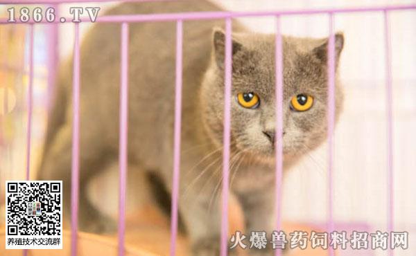猫无时无刻想杀死主人为什么?猫咪眼中最讨厌的主人