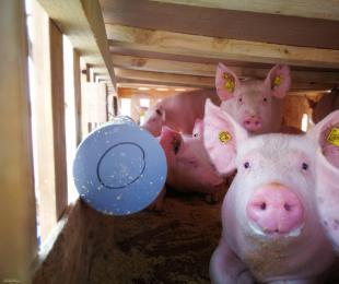 682头法国种猪搭乘南航波音777F货机飞抵太原
