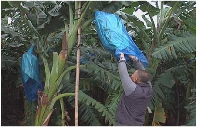 园香蕉步骤画法