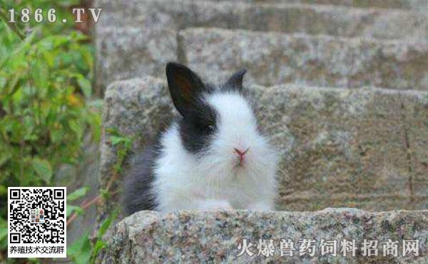 幼兔吃什么?幼兔拉稀怎么办?